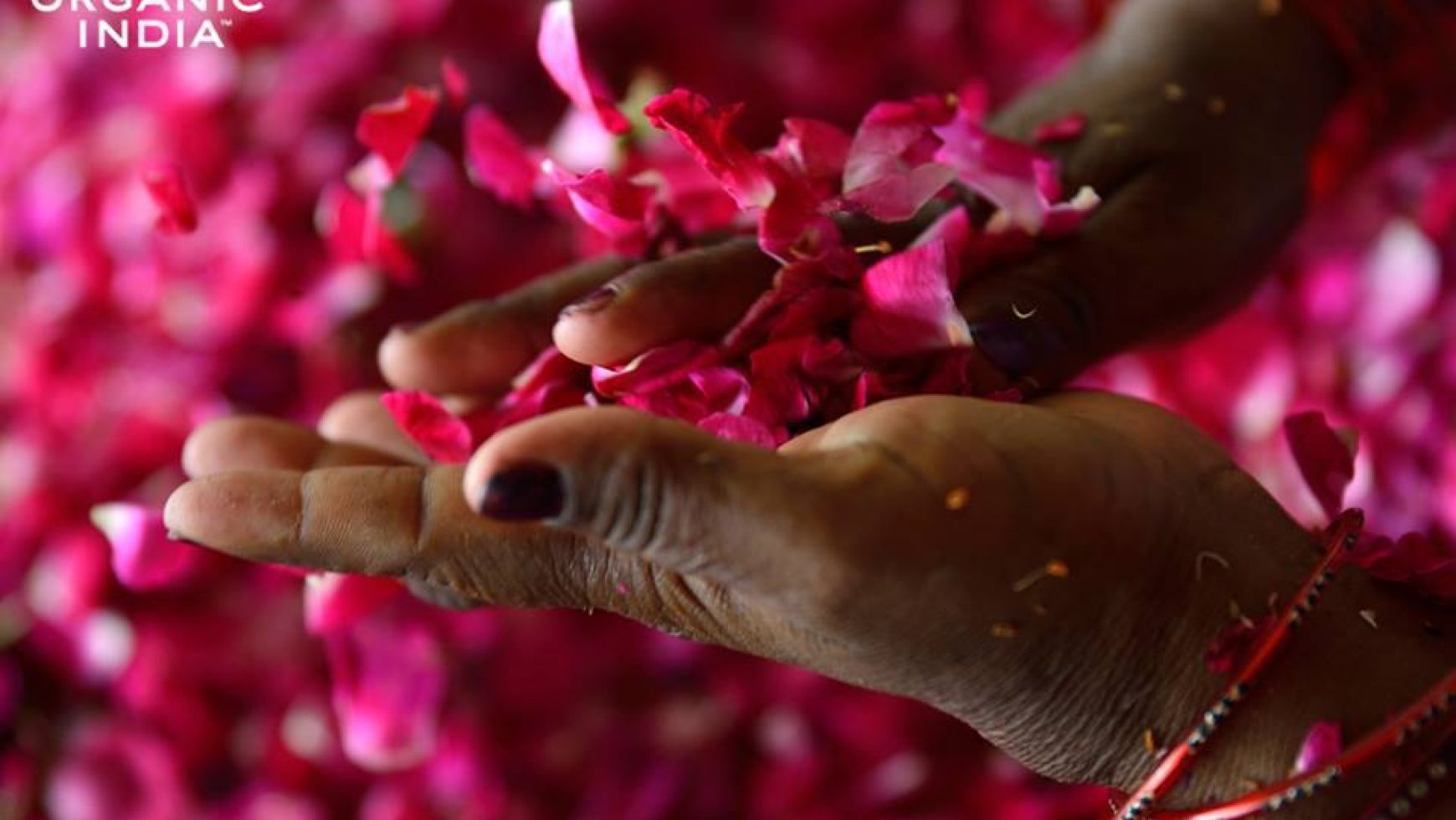 De ce ORGANIC INDIA foloseste intreaga planta in produsele sale