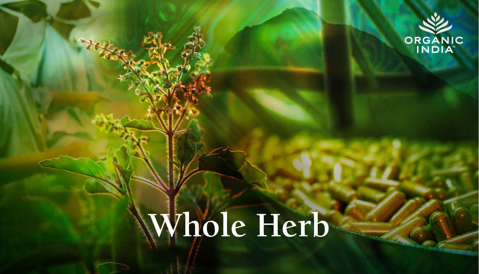 Whole-Herb-US.jpg