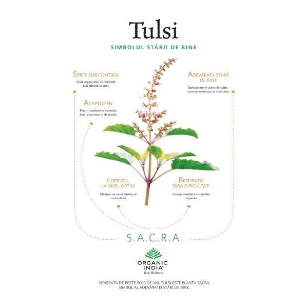 Tulsi, planta medicinala S.A.C.R.A.
