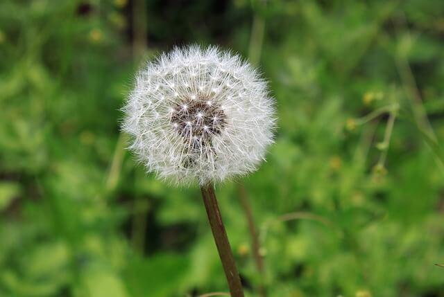 Efectele-negative-ale-stresului-alergii-organicindia-5.jpg