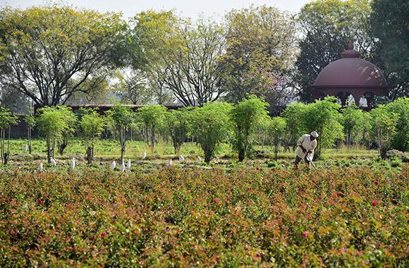 Agricultura Regenerativa: Reinsanatosirea Pamantului si a Comunitatilor