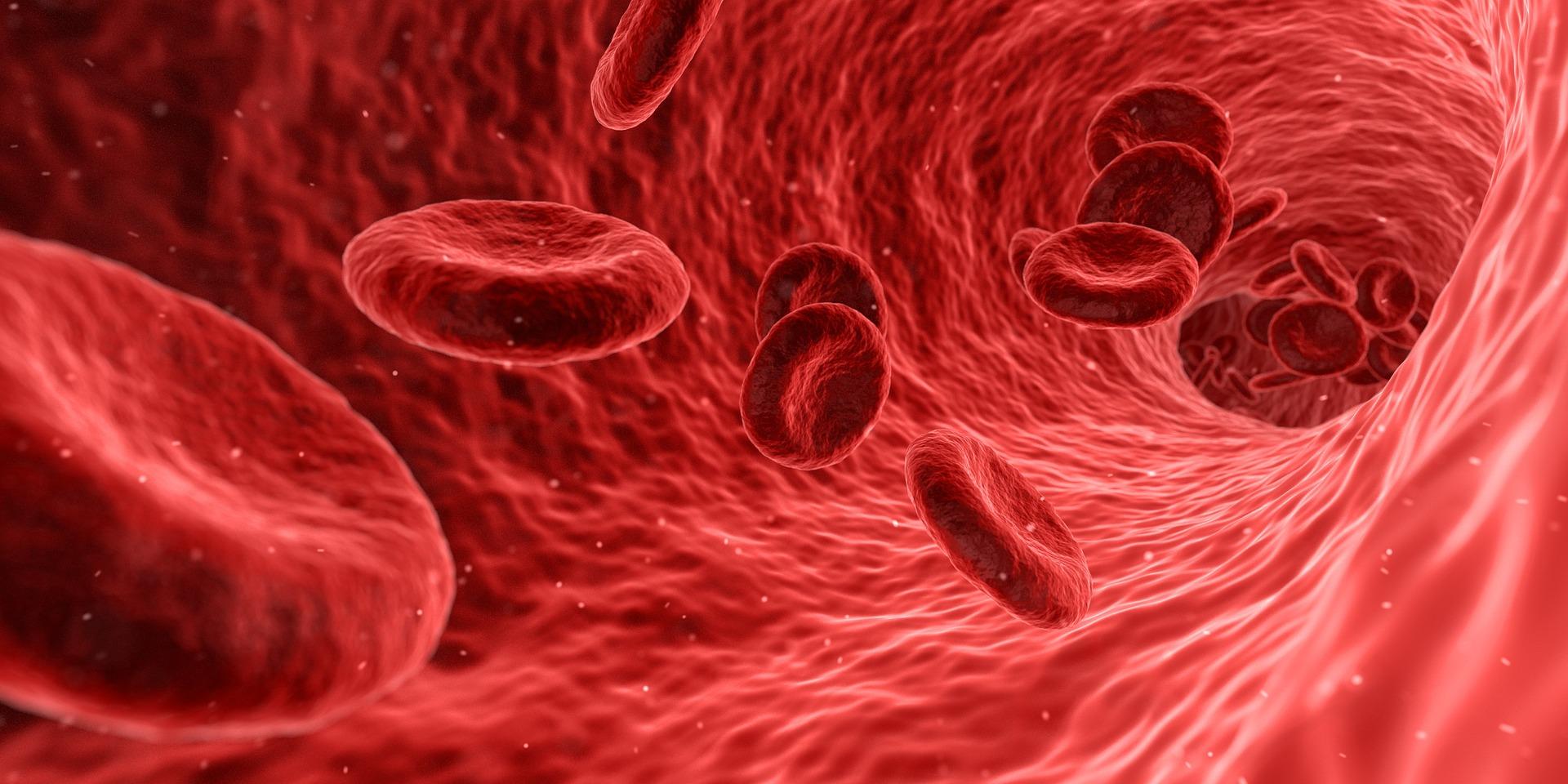 Apendicele si sistemul imunitar