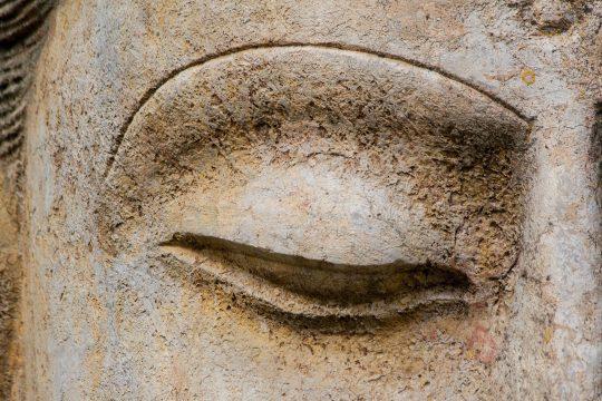Brahmi~Gotu Kola (Centella asiatica), planta sanatatii creierului