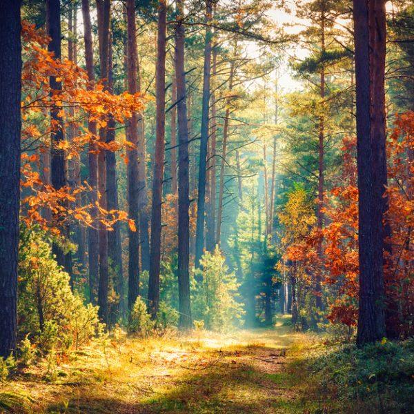 Toamna este sezonul Vata: cum se adaptează doșele