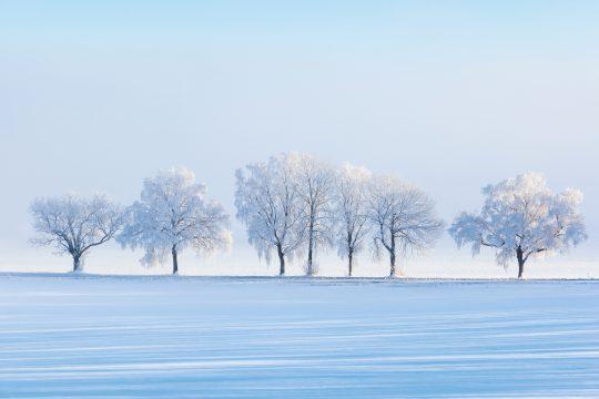Iarna este anotimpul Kapha: cum se adaptează Doshele