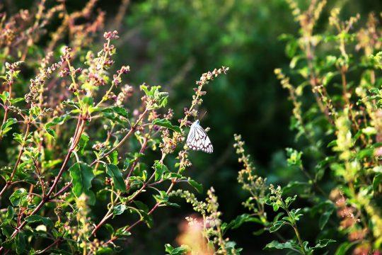 Cele mai bune plante pentru îmbunătățirea stării de bine