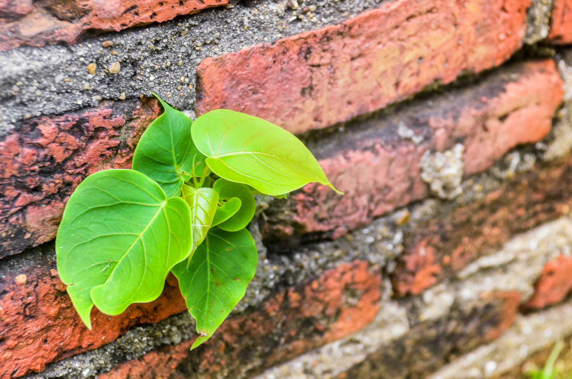 plante-pentru-imunitate.jpg
