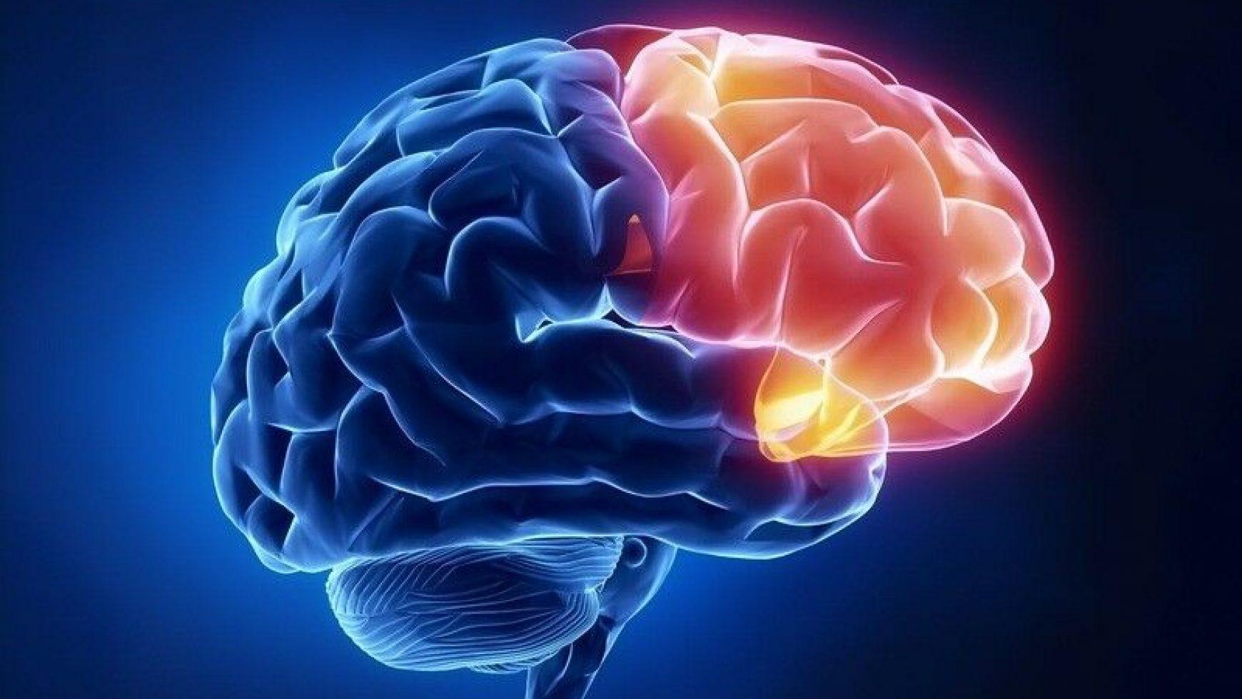 8 Plante care susțin o minte clară și funcțiile cognitive