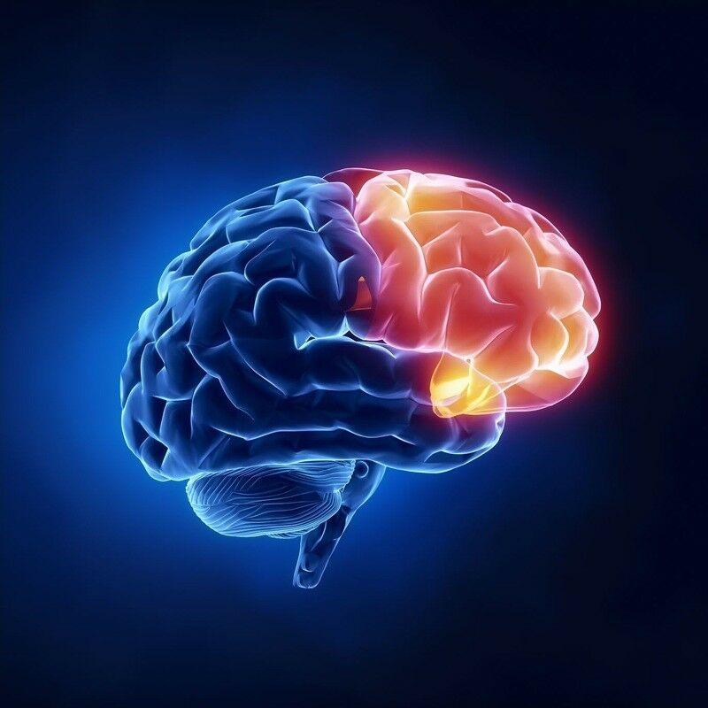 6 Plante care susțin o minte clară și funcțiile cognitive