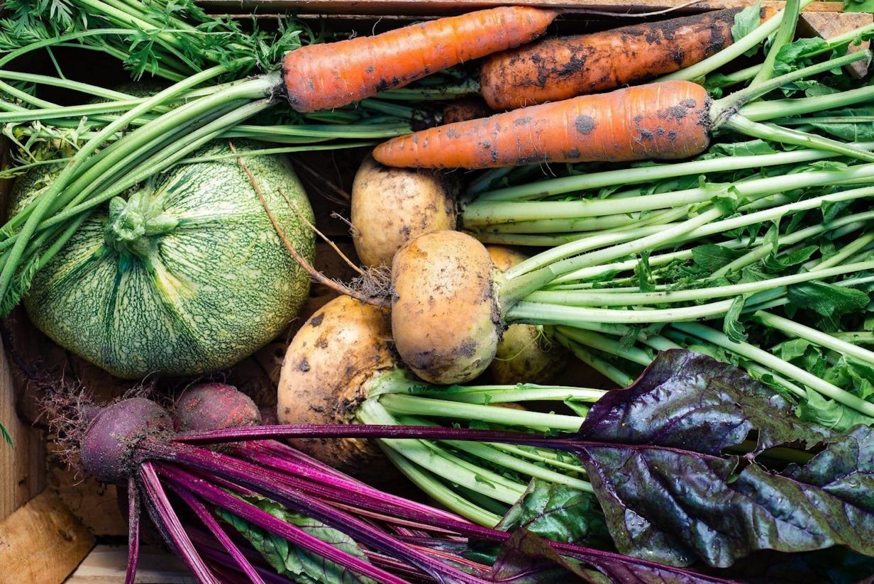 Agricultura regenerativă, sănătate și conștiință în farfuria ta
