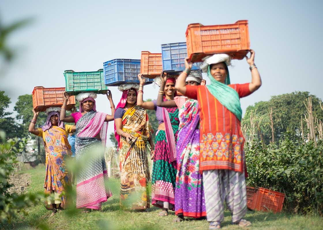 fermierii-nostri.jpg
