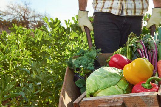 Cum ne poate face fericiți agricultura regenerativă