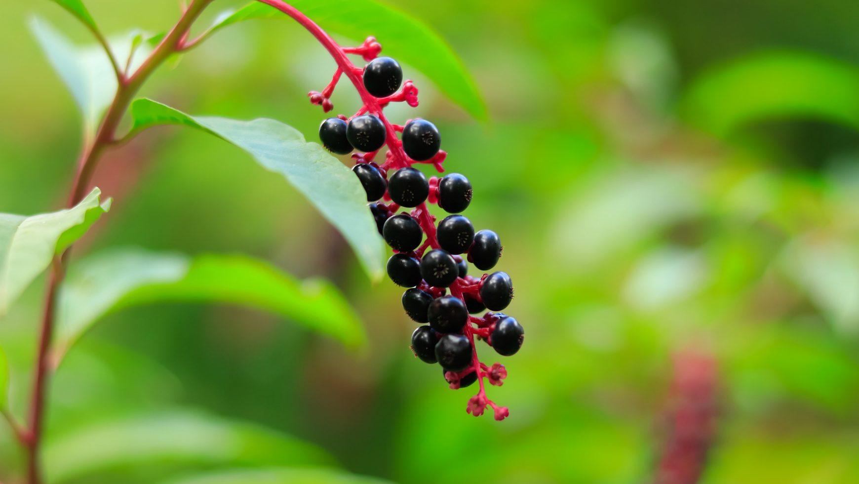 Antioxidantii: ce sunt, de ce sunt importanti si unde se regasesc