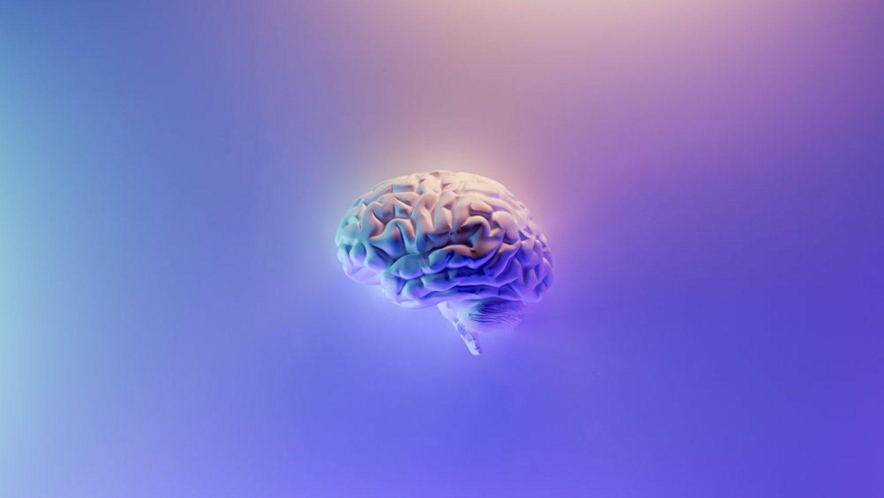 Creierul e într-adevăr necesar?
