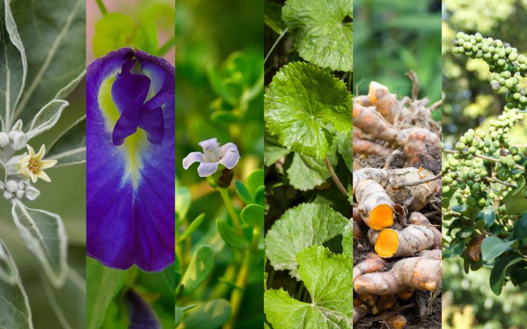 Alimente pentru creier: 6 plante Ayurvedice hrănitoare