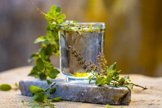 Tulsi pentru imunitate: o plantă cu beneficii dovedite